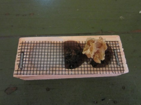 Smearing Wax And Honey On The Cage
