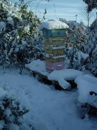 hive in winter