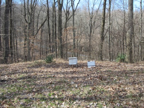 Apiary Beginnings!