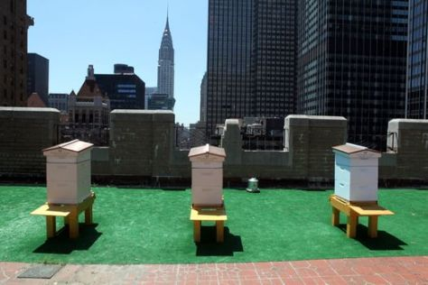 Bee-hives-on-the-roof-of-the-Waldorf-Astoria
