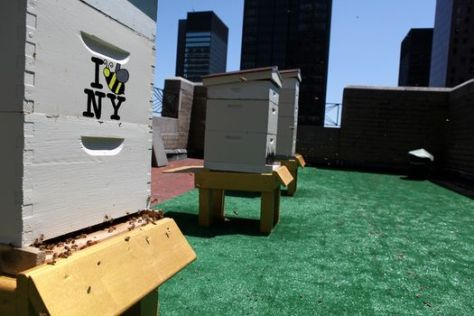 Waldorf-Astoria-bee-hives-on-roof_2