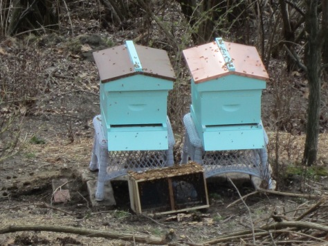 The bees still in the box will eventually make it into the hives by themselves.
