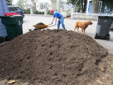Loyal Yard Dude Alex shovels compost with the assistance of The Noble Bayard