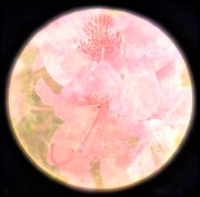 Full Flower Moon