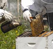 Smoking a Hive