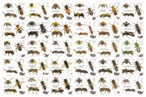 Bee Poster for sale