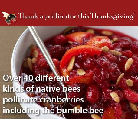 Pollinator Thanksgiving