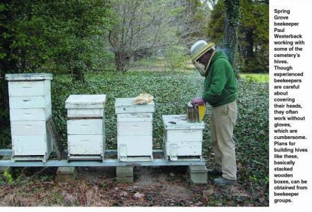 Spring grove beehives 2