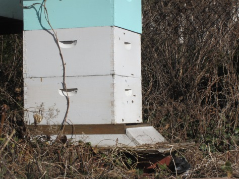 """My """"Beautiful Beehives"""" are in need of a new paint job!"""