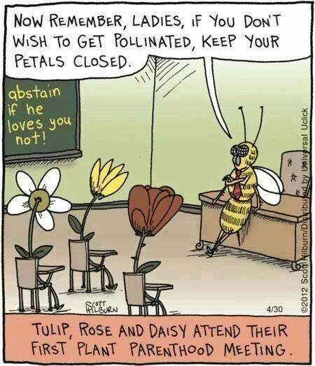 Bee humour